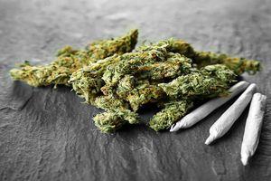 Những loại ma túy nào được sử dụng nhiều nhất hiện nay?