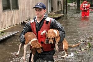 Mỹ: Giải cứu hàng loạt thú cưng trong lũ do bão Florence