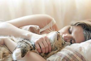Chớ ngủ chung với mèo vì những lý do sau