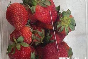 Chuyện lạ có thật ở Australia: Những trái dâu có 'hột' là kim khâu
