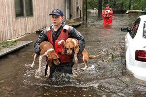 Cảnh giải cứu hàng loạt chó mèo lóp ngóp trong lũ do bão Florence (Mỹ)