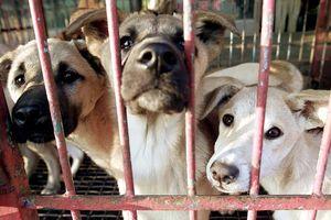 Sử dụng thịt chó, mèo: Nhiều nguy cơ tiềm ẩn