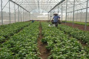 Nghiên cứu, chuyển giao giống cây trồng: Nhiều bất cập cần khắc phục