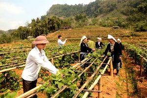 Tuyên Quang coi kinh tế nông nghiệp là thế mạnh lâu dài