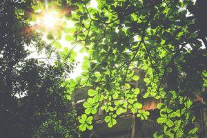 Dự báo thời tiết 20.9: Hà Nội sáng sớm có mưa rào và dông, ngày nắng đẹp