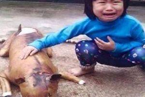 Từ bỏ sở thích nuôi chó vì ám ảnh thú cưng bị giết thịt