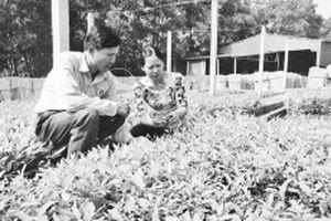 Quản lý bền vững rừng trồng sản xuất
