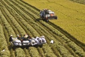 Từ nghị quyết về 'tam nông' đến nền nông nghiệp hiện đại