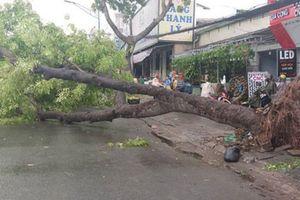 TP HCM: Kiến nghị không đấu thầu chăm sóc cây xanh
