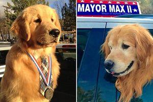 Chú chó Max trở thành 'thị trưởng' đặc biệt ở Mỹ