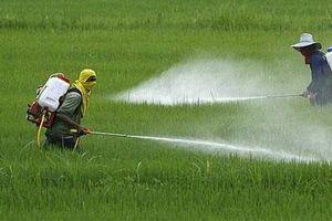 Quy định về tổ chức sản xuất và buôn bán thuốc bảo vệ thực vật