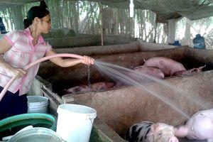 Hậu Giang: Đẩy mạnh tuyên truyền bảo vệ môi trường trong chăn nuôi