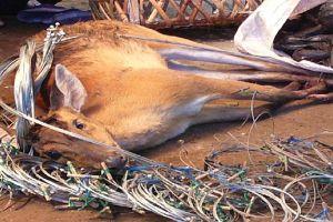 Tàn sát và buôn bán thú hoang: Nếu tôi là kiểm lâm hoặc cảnh sát môi trường... thì sao?