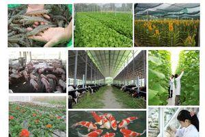 Sơ kết 5 năm thực hiện Đề án tái cơ cấu nông nghiệp