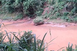 Trại chăn nuôi tập trung gây ô nhiễm môi trường