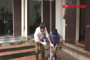 Phát hiện nhiều ổ bệnh dại tại Phú Thọ