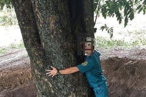Sẽ xử lý hình sự vụ cán bộ tiếp tay 'đào trộm' gỗ quý hồ Dầu Tiếng