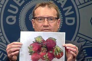Khủng hoảng trái cây Úc: Sau dâu tây, tiếp tục tìm thấy kim khâu trong xoài