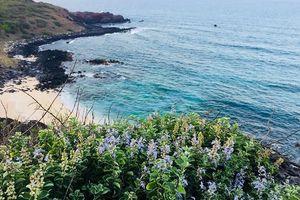 Muốn nạp 'vitamin sea' mà vừa đẹp vừa nên thơ thì cứ đến đảo Phú Quý
