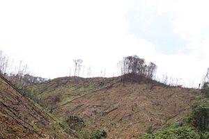Để người thân phá rừng Trưởng phòng Nông nghiệp huyện Tràng Định bị bắt