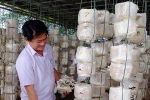 Đà Nẵng: Thúc đẩy hợp tác quốc tế trong phát triển sản phẩm dược liệu từ thiên nhiên