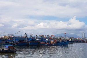 Đà Nẵng: Quá tải khu neo đậu tàu thuyền trong mùa mưa bão