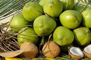 Đánh thức trái dừa Bến Tre