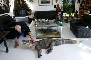 Ông lão nuôi hơn 400 con cá sấu, bò sát ngay trong nhà