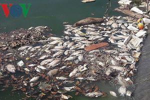 Cá chết nổi trắng hồ điều tiết Phước Lý, Đà Nẵng