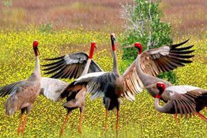 Kỳ thú khu Ramsar 2.000 của thế giới