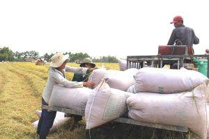 Bộ Công Thương lần đầu tiên tổ chức Hội nghị gạo thế giới