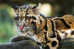 5 loài vật đã biến mất trong thế kỷ 21