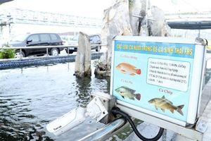 Công khai kết quả quan trắc khí thải của Công ty Formosa Hà Tĩnh
