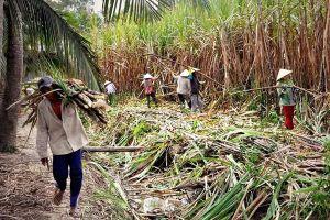 Đồng bằng Sông Cửu Long: Nông dân chạy lũ, nhà máy chạy... nông dân