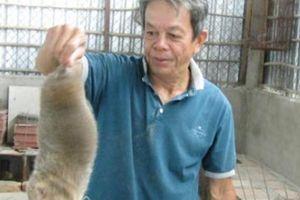 Nuôi 'chuột rừng', giỏi đào hang, cho ăn tre già, có 20 triệu/tháng