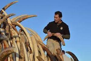 Thông tin di truyền trong ngà voi tố cáo tội phạm