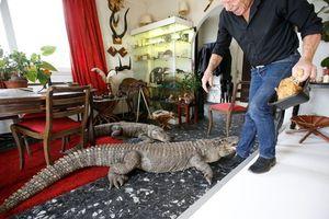 Người đàn ông sống cùng 400 thú cưng bò sát, cho cá sấu ngủ chung giường
