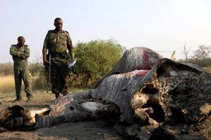 Botswana: Phát hiện số lượng voi bị giết lớn nhất trong lịch sử
