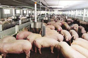 Hà Nội: Điều tra, khảo sát tình hình sử dụng kháng sinh và hiện trạng môi trường tại các cơ sở chăn nuôi