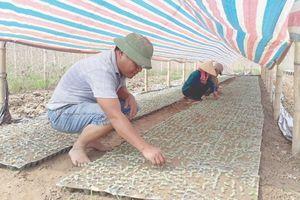 Các ngân hàng thực hiện khoanh nợ, giảm lãi vay hỗ trợ nông dân khắc phục thiệt hại do bão, lũ
