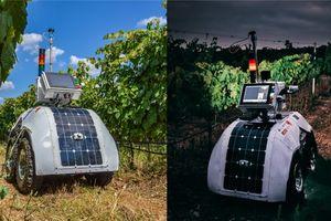 Robot nông nghiệp mới cung cấp những trải nghiệm chăm sóc vườn nho ấn tượng