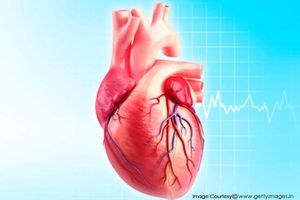 Trung bình một cuộc đời, trái tim đập tới 2,5 tỷ lần
