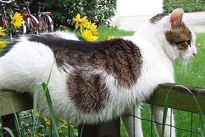 Những khoảnh khắc hài hước nhất thế gian của loài mèo