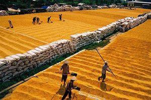 Hội nghị gạo thế giới lần thứ 10 sẽ diễn ra tại Hà Nội