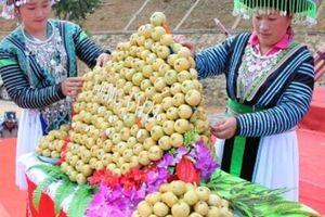 Sơn La: Đưa sản phẩm táo sơn tra vươn xa trên thị trường