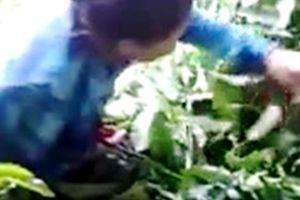 Lâm Đồng: Làm rõ thông tin thương lái mua lá cà phê tươi 50.000 đồng/kg