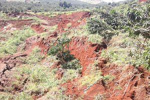 Lâm Đồng: Nhiều diện tích cà phê bị sạt lở chôn vùi