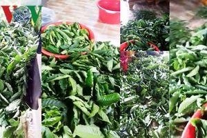Xôn xao việc bán lá cà phê tươi 50.000 đồng/kg tại Lâm Đồng