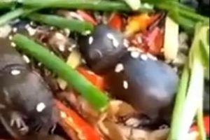 Khách Tây 'tá hỏa' với món 'chuột bao tử' của nhà hàng Trung Quốc