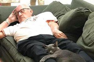 Gây quỹ gần 700 triệu đồng nhờ những bức ảnh ngủ với mèo
